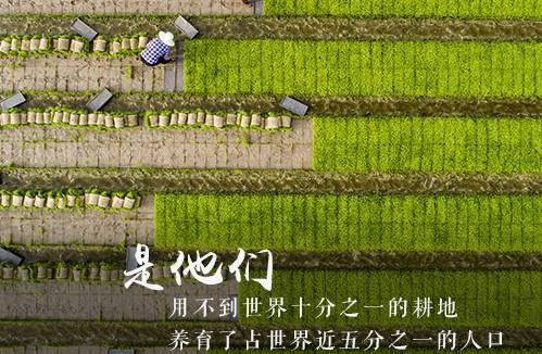 农历秋分被设立为中国农民丰收节
